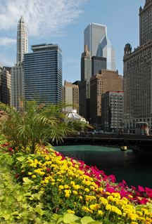 chicago cityscape with flowers